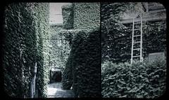 diptych with ladder or legacy of sex 3 (kazimierz.pietruszewski) Tags: autumn vintage diptych 21 poland polska retro ladder krakw entry jesie secrecy