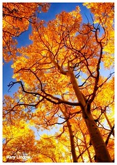 October 25, 2015 - Resplendent colors of fall. (Mary Lindow)