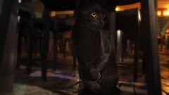 Good Luck Of Course (Coquine!) Tags: sardegna italy black cat italian italia sardinia negro gato katze superstition schwarz sardinien pula aberglaube christianleyk