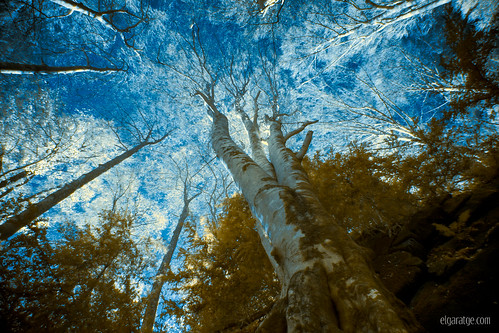 """Awakening of nature • <a style=""""font-size:0.8em;"""" href=""""http://www.flickr.com/photos/29952986@N05/23096766335/"""" target=""""_blank"""">View on Flickr</a>"""