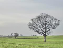 Mild December landscape (Conundrum37) Tags: tree mill windmill ripple walmer