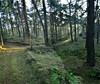 Heide pano december 2016 (eddy.vanransbeeck) Tags: bos heide natuur buiten limburg lommel kattenbos vreddy