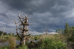 DSC02441 (David Housewright) Tags: rx100 water tree brooding sky dark withered