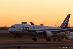 Itami Sky Park 2017.1.1 (13) JA810A / ANA's B787-8 (double-h) Tags: eos6d ef300mmf28lisiiusm rjoo itm osakaairport itamiairport 大阪空港 伊丹空港 airplane 飛行機 伊丹スカイパーク itamiskypark ja810a ana 全日空 b787 b7878 dreamliner
