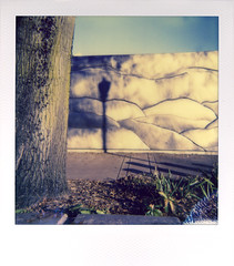 Waterfront (R. Drozda) Tags: portland oregon waterfront tommccallwaterfrontpark pdx tree wall lamp shadow sky polaroid600 impossibleprojectcolor600film instantfilm light drozda