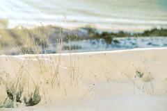 Wave of Sunshine (WilliamND4) Tags: sunshine coast hss sliderssunday nikond810 snow