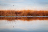Reed reflection (catkin314) Tags: reeds newforest newforestnationalpark reflections colour
