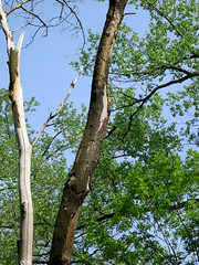 Woodpecker (vapspwi) Tags: minneapolis minnesota minnehaha park bird woodpecker