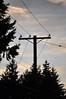 "Power Lines 2 (Tynan Phillips) Tags: nikon nikond90 d90 dslr denmanisland bc britishcolumbia canada canadian tree trees plants sunset sunlight silhouettes silhouette silhouetted forest powerlines ""powerlines"" powerpoles ""powerpoles"" sky clouds shadow"