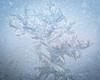 Frosty bouquet (A_Peach) Tags: eis flektogon flektogon35mmf24 winter ice frosting frostpattern eisblume icy eisig panasoniclumixg5 mft m43 lumix panasonic microfourthird micro43 apeach anjapietsch vintagelens manualfocus adaptedlens