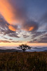 Highlands Dawn (Matt Williams Gallery) Tags: mattwilliamsphotography nikon d500 roanhighlands humpmountain appalachiantrail hiking dawn sunrise camping clouds colorful mountains northcarolinaphotographer landscape landscapephotography fineartphotography fineart grass view tree sky nature naturephotography