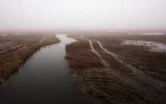 (AnaFas) Tags: fog landscape newengland connecticut ct milford foggy beach statepark silversandsstatepark marsh nature lines form composition