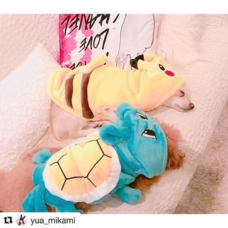 #Repost @yua_mikami with @repostapp ・・・ 我が家のポケモンたち…⚡️🌊💓💓 台湾の夜市で買った服だよ💋  #台湾  #夜市 #taiwan  #taipei #pokemon #pokemongo #pikachu