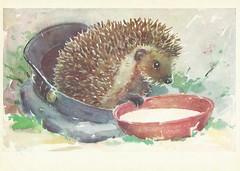 5 (Liepziede) Tags: hedgehog 1975 lgamburger oldrussian paintedhedgehogs postcard postcrossing