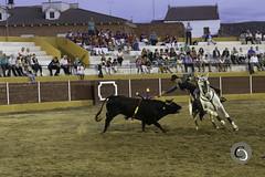 16082015-_MG_5827 (Cristian Casado) Tags: espaa toros corrida cortes tradicion tauromaquia rejoneo festejos taurinos