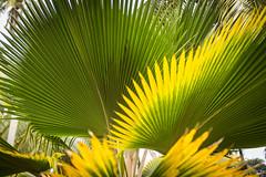 Seychellerna - La Digue (Göran Höglund (Kartläsarn)) Tags: nikon rosa seychelles d800 ladigue 2014 bussarna rosabussarna pinkcaravan seychellerna kartläsarn kartlasarn göranhöglund