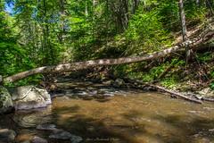 Hacklebarney State Park_2777 (smack53) Tags: statepark summer water river outdoors newjersey nikon stream blackriver summertime longvalley hacklebarneystatepark d3100 smack53