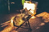 10_99_0003 (d_fust) Tags: cat kitten gato katze 猫 macska gatto fust kedi 貓 anak katt gatito kissa kätzchen gattino kucing 小貓 고양이 katje кот γάτα γατάκι แมว yavrusu 仔猫 का skorpi बिल्ली बच्चा