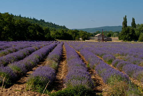 Provence_09_170