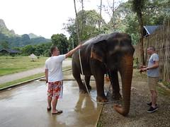 Olifanten wassen