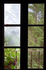 DSC_0815 (juberhas) Tags: summer plant verde green planta window ventana wine uva grape vino verano4 verano2012