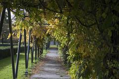 Floriade_251015_26 (Bellcaunion) Tags: park autumn fall nature zoetermeer rokkeveen florapark