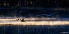 Into the Light (craig goettsch) Tags: nature water nikon wildlife ngc bull snakeriver d750 elk grandtetonnp sunrays5 oxbowbendrd