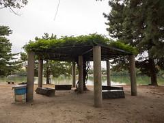 P1580650.jpg (Rambalac) Tags: water japan pond asia вода пруд fukuokaken япония fukuokashi азия lumixgh4