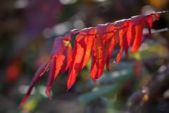 autumn blur (jimmy_racoon) Tags: autumn fall nature colors minnesota landscape is fallcolors 70200 xsi f4l 70200f4lis canonxsi