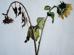Realismus Blumen Malerei realistische Blumenmalerei Kunst                (iloveart106) Tags: kunst blumen malerei   realismus   blumenmalerei   realistische