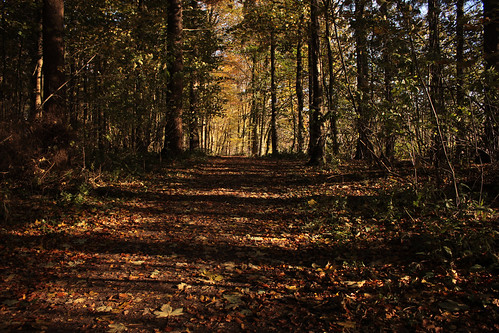 """Herbstwaldspaziergang (01) • <a style=""""font-size:0.8em;"""" href=""""http://www.flickr.com/photos/69570948@N04/22862852682/"""" target=""""_blank"""">View on Flickr</a>"""