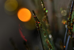 Glitter tree (Nick.Ramsey) Tags: macro lights bokeh christmastree beautifulbokeh macromondays nickramsey canonef100mmf28lmacro eos7dmarkii