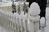 Snowy fence (nikname) Tags: snow snowydays snowybranches snowytrees trees winter wintertrees citystreets