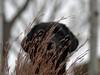 Boo! (d2roberts) Tags: dog dunkel labrador blacklab grass ornamentalgrass