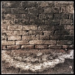 350/366 (jim-green777) Tags: 2016 december 366project wall decay bricks cellar mobilephotography iphone7