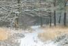 Code geel (Pieter ( PPoot )) Tags: sneeuw bospad bladeren dor gras geel