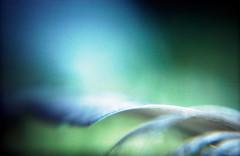 flower macros (somekeepsakes) Tags: 2013 holga135 kodakelitechromeeb100 analog analogue closeup crossprocessed deutschland europa europe film germany lomo macro macrolens makro plasticlens toycamera xpro