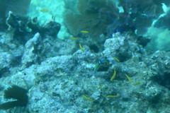 44. John Pennekamp coral reef (Misty Garrick) Tags: johnpennekamp johnpennekampreef johnpennekampcoralreefstatepark coralreef florida keylargofl keylargo floridakeys atlanticocean