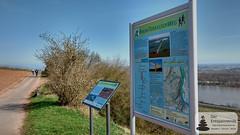 Rheinterrassenweg bei Nierstein
