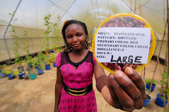 Safeguarding Africa's beans: CIAT's Kawanda genebank and research station