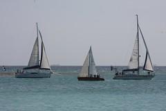 298-IMG_5912 (eric15) Tags: sea beach water race cat for boat eva surf sailing wind offshore sailors luna aruba international dash sail regatta sailor optimist sunfish oranjestad surfside