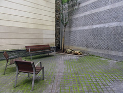 waiting for godot (maximorgana) Tags: brown tree green corner bench moss chair waiting pavement bilbao pipeline forgodot