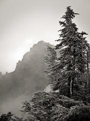 Mountain Grace (Crest Pictures) Tags: mtrainiernationalpark pinnaclepeak mountainhemlock plummerpeak