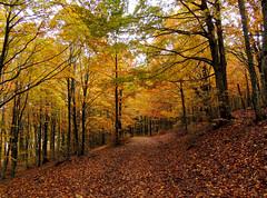 Pratomagno - 3 (anto_gal) Tags: alberi firenze toscana autunno montagna bosco casentino arezzo pratomagno valdarno 2015 lorociuffenna
