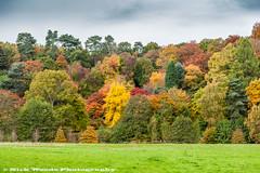 Winkworth_DSC4798 (Nick Woods Photography) Tags: autumn trees colour landscape colours nt autumnleaves autumncolours greenery colourful nationaltrust shrubs winkworth autumntrees winkwortharboretum autumntree autumnlandscape