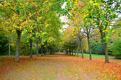 Autumn (jon timmins) Tags: autumn leaves kent godmersham