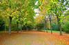 Autumn (jon timmins) Tags: autumn leaves kent godmersham