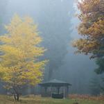 Nebel im Wald (1) thumbnail