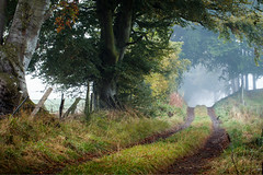 The path to follow (Stuart Stevenson) Tags: uk morning autumn mist fog fence woodland photography dawn scotland woods path tracks follow foliage valley clydevalley stuartstevenson wwwzerogravitymeuk appicoftheweek