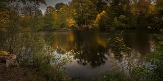 Soirée automnale au bord de l'étang
